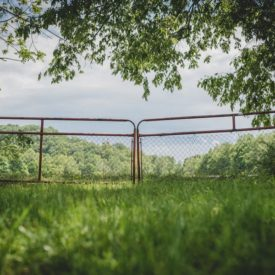 Love gate overlooking working farm fields between corn shed and barn.